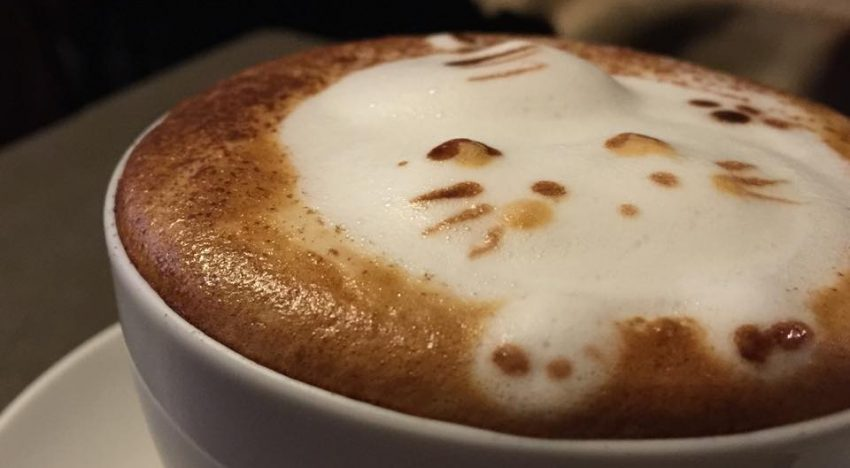 Cool 3D Cat Latte Art or Just A Gimmick?